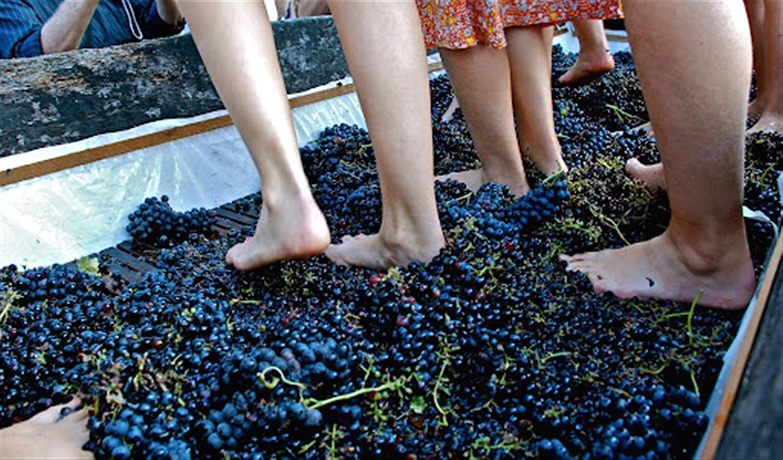 Grape Festival and Barrel Palio